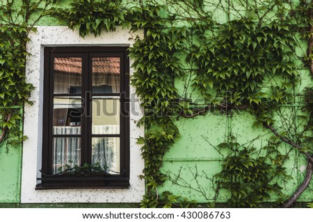 small Window on green wall with ivy - stock photo