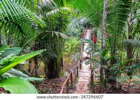 Small wooden bridge in a lush green rain forest near Iquitos, Peru - stock photo