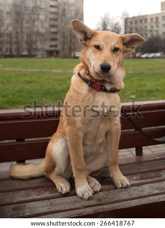 Small yellow dog collar sitting on red bench - stock photo