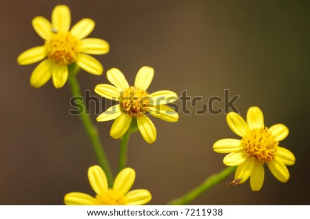 Small yellow flowers - stock photo