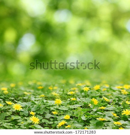 small yellow flowers in grass and  green blurred bokeh background - stock photo