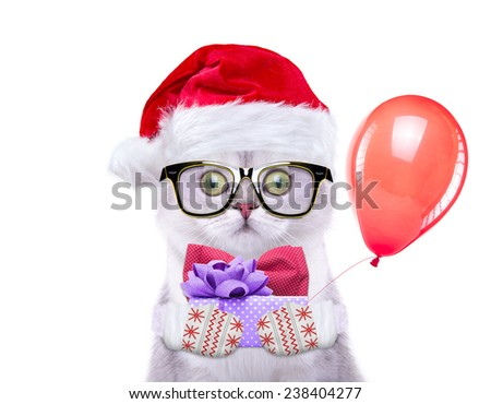 Smart and beautiful cat in a Christmas costume holding a present. Gift Box. New Year's holidays - stock photo