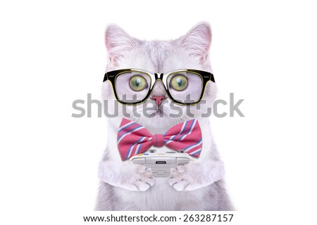 Smart beautiful british cat playing video game console. Funny animals. Trendy cat dressed in beautiful clothes - stock photo