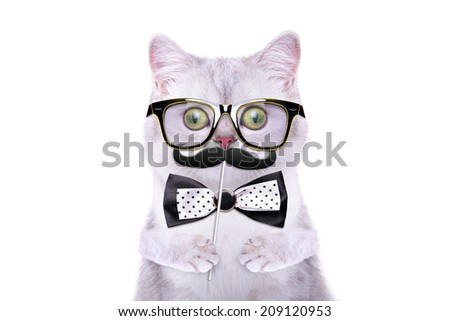 Smart beautiful british cat with a carnival mask. Funny animals. Trendy cat dressed in beautiful clothes. Hipster cat - stock photo