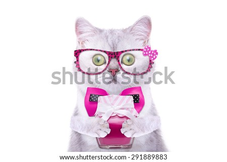Smart beautiful british cat with a jam. Funny animals. Trendy cat dressed in beautiful clothes - stock photo