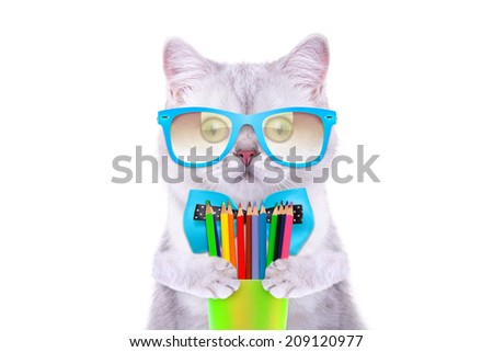 Smart beautiful british cat with colored pencils. Funny animals. Trendy cat dressed in beautiful clothes - stock photo