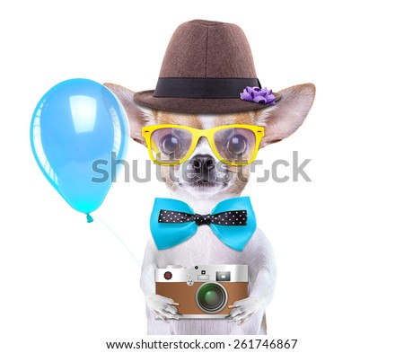 Smart beautiful dog chihuahua with a photocamera. Funny animals. Fashionable dog dressed in beautiful clothes. Hipster dog. Tourists photos - stock photo