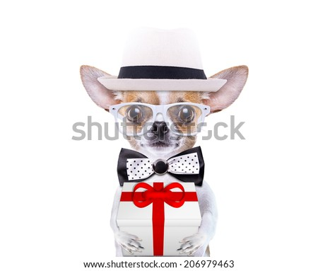 Smart beautiful dog with a gift. Funny animals. Fashionable dog dressed in beautiful clothes - stock photo