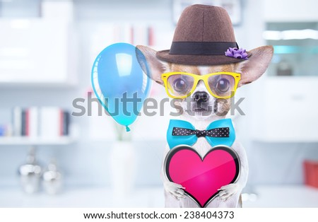 Smart beautiful dog with icon heart. Funny animals. Fashionable dog dressed in beautiful clothes - stock photo