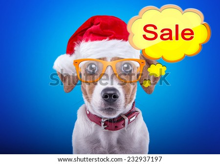 Smart dog in a Christmas costume. Dressed as Santa Claus. New Year's holidays. Christmas sale - stock photo