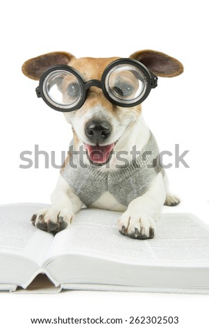 Smart dog student wearing glasses and a sweater studying reading book and summary of lectures. preparation for exams - stock photo