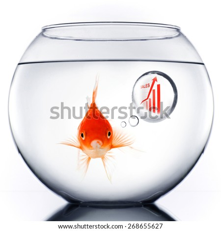 Smart Gold fish in bowl thinking about sales growth - stock photo