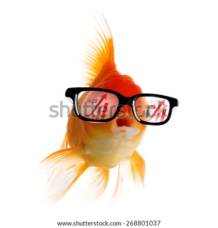 Smart Gold fish in glasses looking at sales growth graph - stock photo