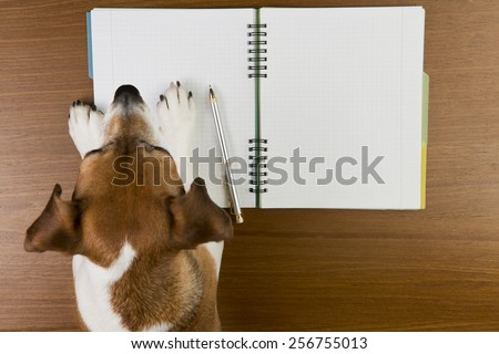 Smart Jack Russell terrier dog making notes in the album white sketch book. Empty space you can put your information. - stock photo