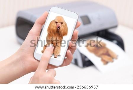 Smartphone.  - stock photo