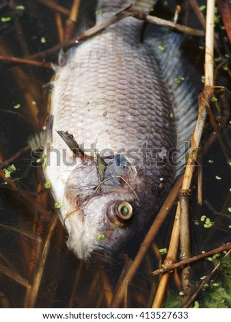 Rotten fish stock photos images pictures shutterstock for Does fish oil make you smell