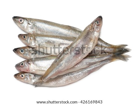 Smelt fishes isolated on white background - stock photo