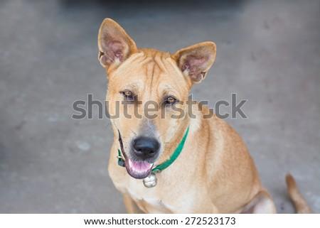 smile dog sit on the ground,eye focus. - stock photo