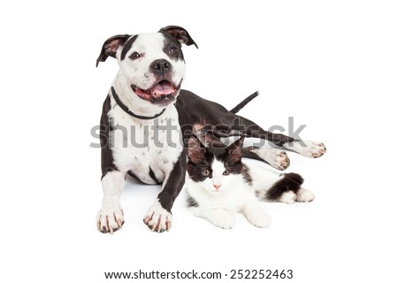 Smiling dog and cute kitten laying together - stock photo