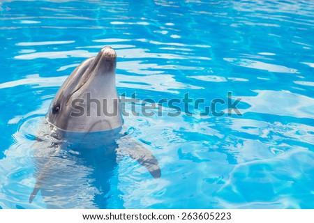 Smiling dolphin - stock photo