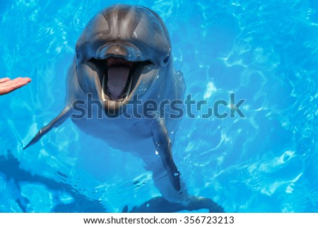 Smiling dolphin. dolphins swim in the pool  - stock photo