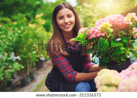 Smiling happy woman displaying a pink hydrangea plant that she has selected from amongst the plants on display at a nursery as she crouches amongst the potted houseplants - stock photo