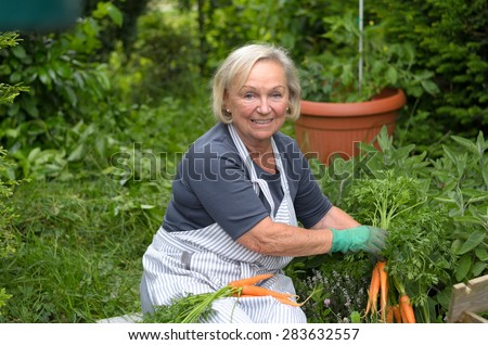 Smiling Middle Aged Blond Woman at the Garden Holding Carrots From her Green Plants While Looking at the Camera. - stock photo