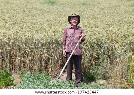 Smiling old man farmer standing and holding fork in barley field - stock photo