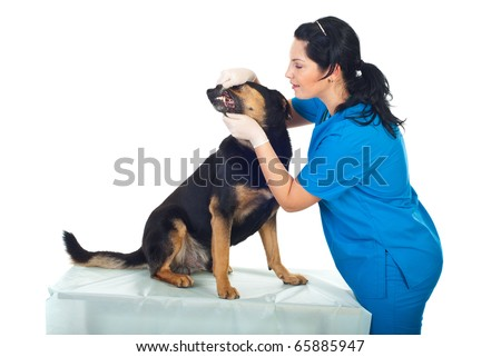 Smiling veterinary doctor examine teeth dog in medical office - stock photo