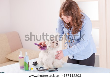 Smiling woman grooming a dog purebred maltese. - stock photo