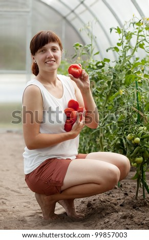 Smiling woman picking tomato in the hothouse - stock photo