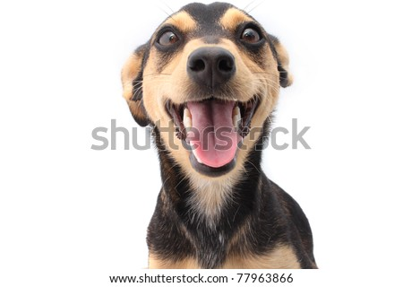 Smiling young mixed breed dog - stock photo