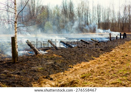 Smoke After Bushfire, Burned Columns - stock photo