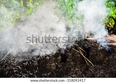 Smoke from burning wood to make charcoal. - stock photo