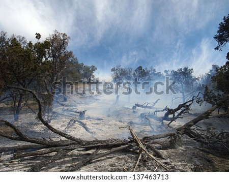 Smoke rising from a partially burned forest. - stock photo