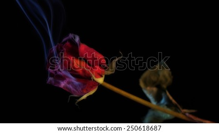 Smoking Red Rose, a symbol of a burning love, or one that burnt out. - stock photo