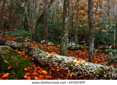 Smoky mountains national park, autum forest with side creek and fallen leaves and log. - stock photo