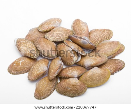 Smooth clam isolated on a white background. - stock photo