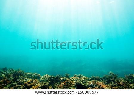 Smooth Cornetfish (Fistularia commersonii) underwater scene sun rays in deep blue sea - stock photo