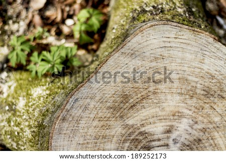 snag from fresh cut tree. with small depth of field - stock photo