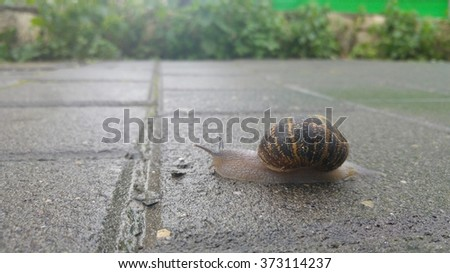 Snail crawling on a pavement after the rain. Stock photo - stock photo