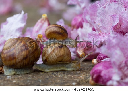 Snail crawling on each other on the background colors  - stock photo