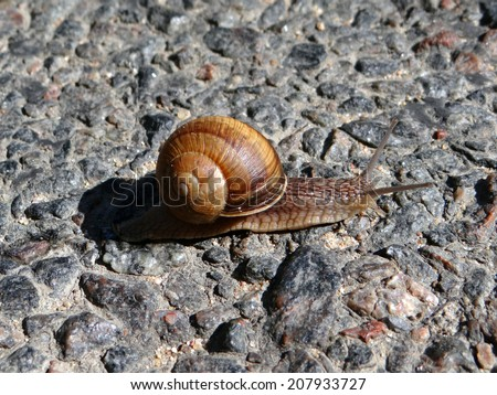 Snail crawling on the road - stock photo