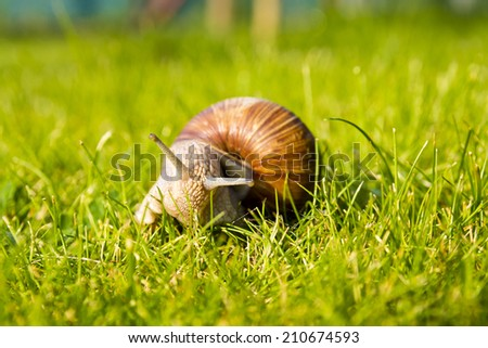 Snail in grass - stock photo