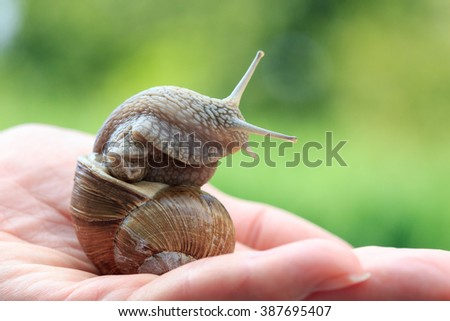 Snail in hand - stock photo