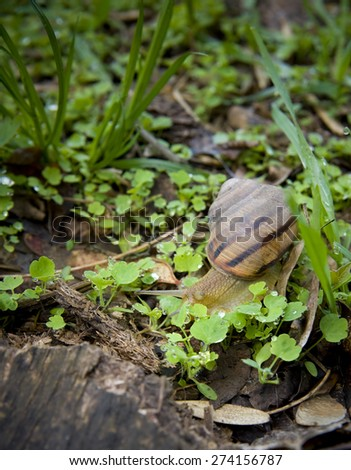 Snail in the grass - stock photo