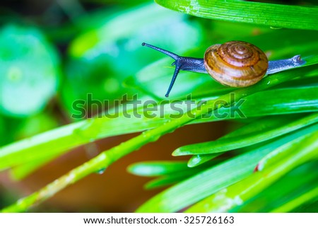 Snail in the green leafs - stock photo