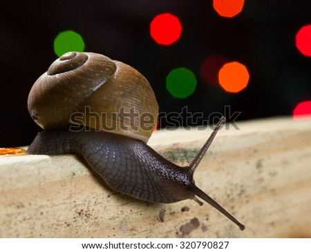 Snail is crawling down on the wood. Close-up. Selective focus - stock photo