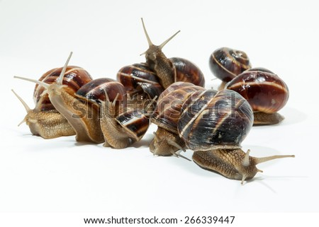 Snail isolated on white background. Close-up view - stock photo