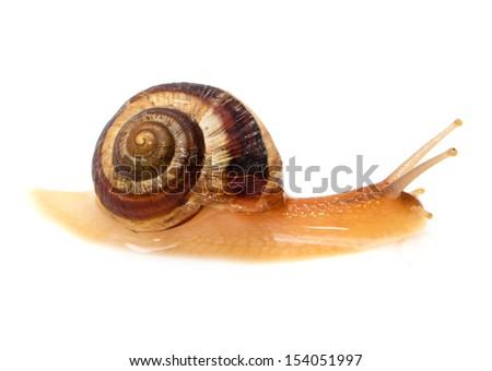 snail on a white background - stock photo